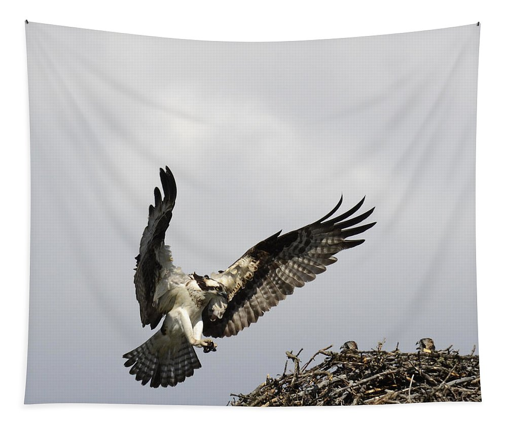 Outdoors Tapestry featuring the photograph Osprey by Bob Christopher