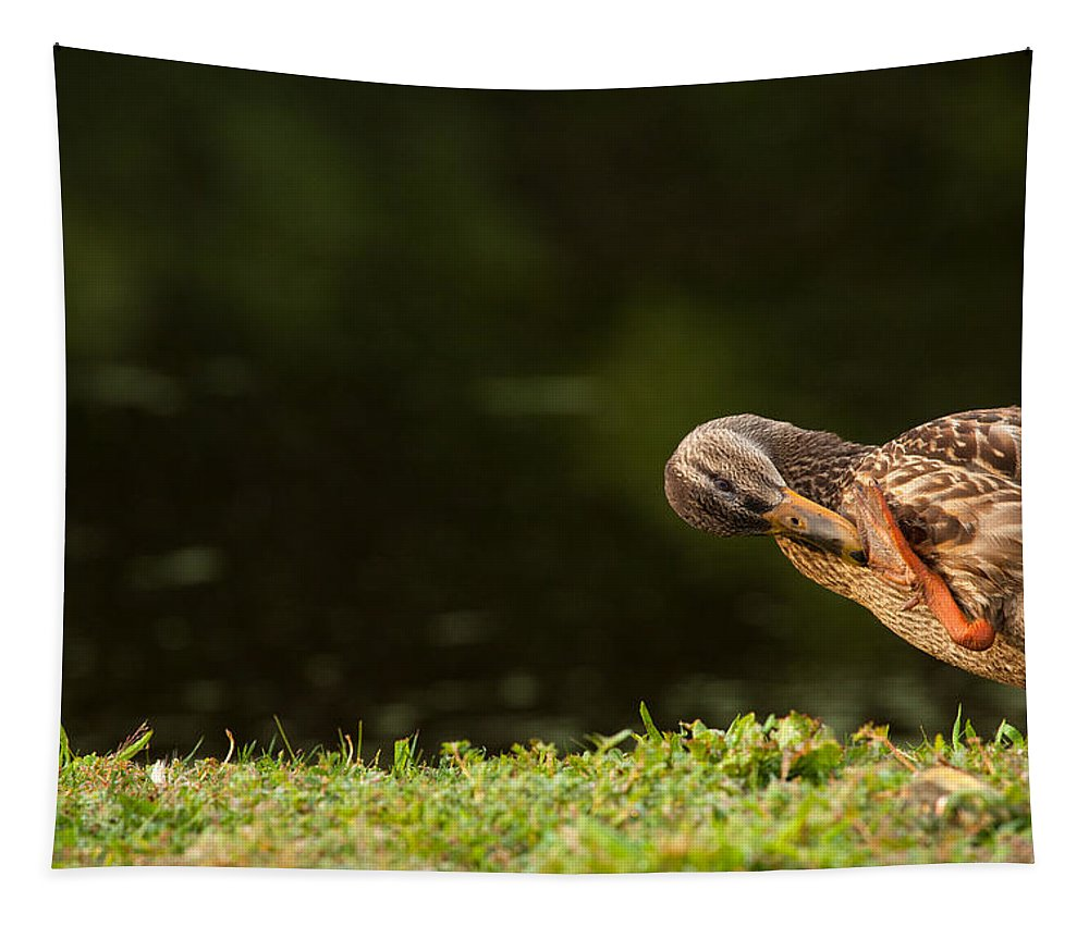 Duck Tapestry featuring the photograph Ouch What Did I Step On by Karol Livote