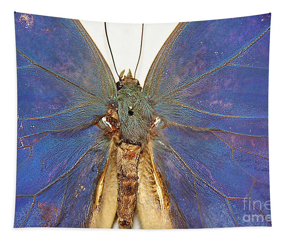 Butterflie Tapestry featuring the photograph Out Of The Blue.. by Jolanta Anna Karolska