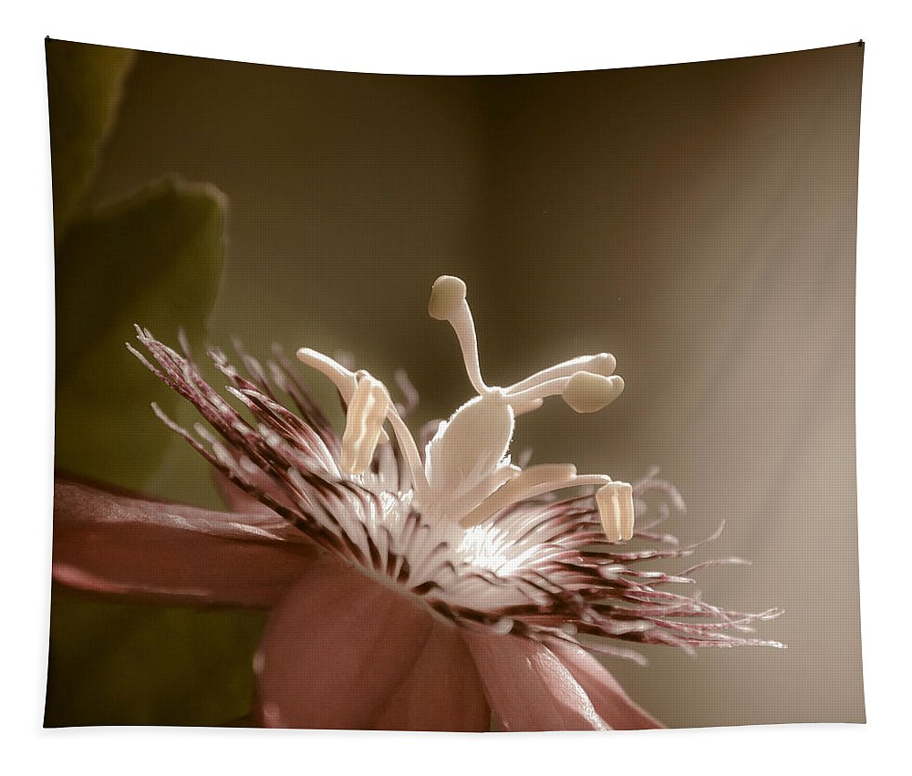Flower Tapestry featuring the photograph Passion Flower by Trish Tritz
