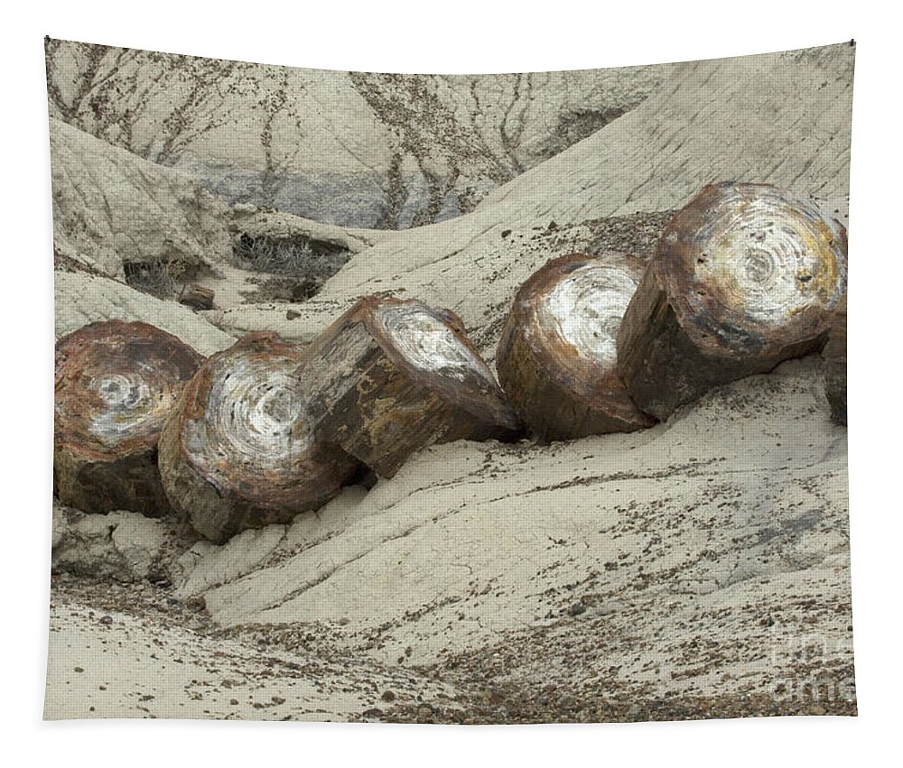 Petrified Forest Tapestry featuring the photograph Petrified Forest 1 by Bob Christopher