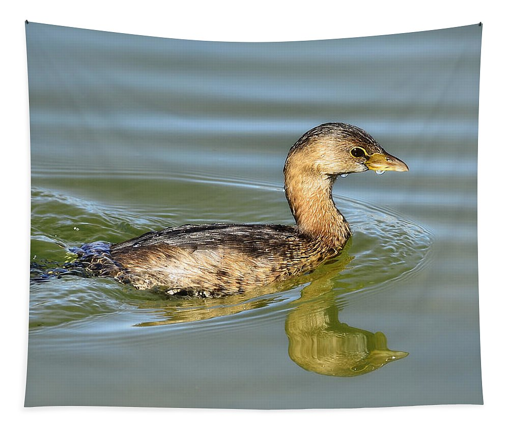Pied-billed Grebe Tapestry featuring the photograph Pied-billed Grebe by Saija Lehtonen