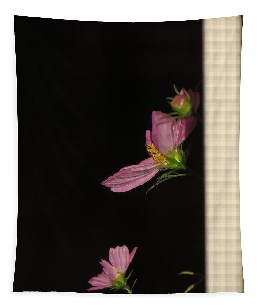 Floral Cosmos In Dark Tapestry featuring the photograph Pink Cosmic Stars by Sonali Gangane