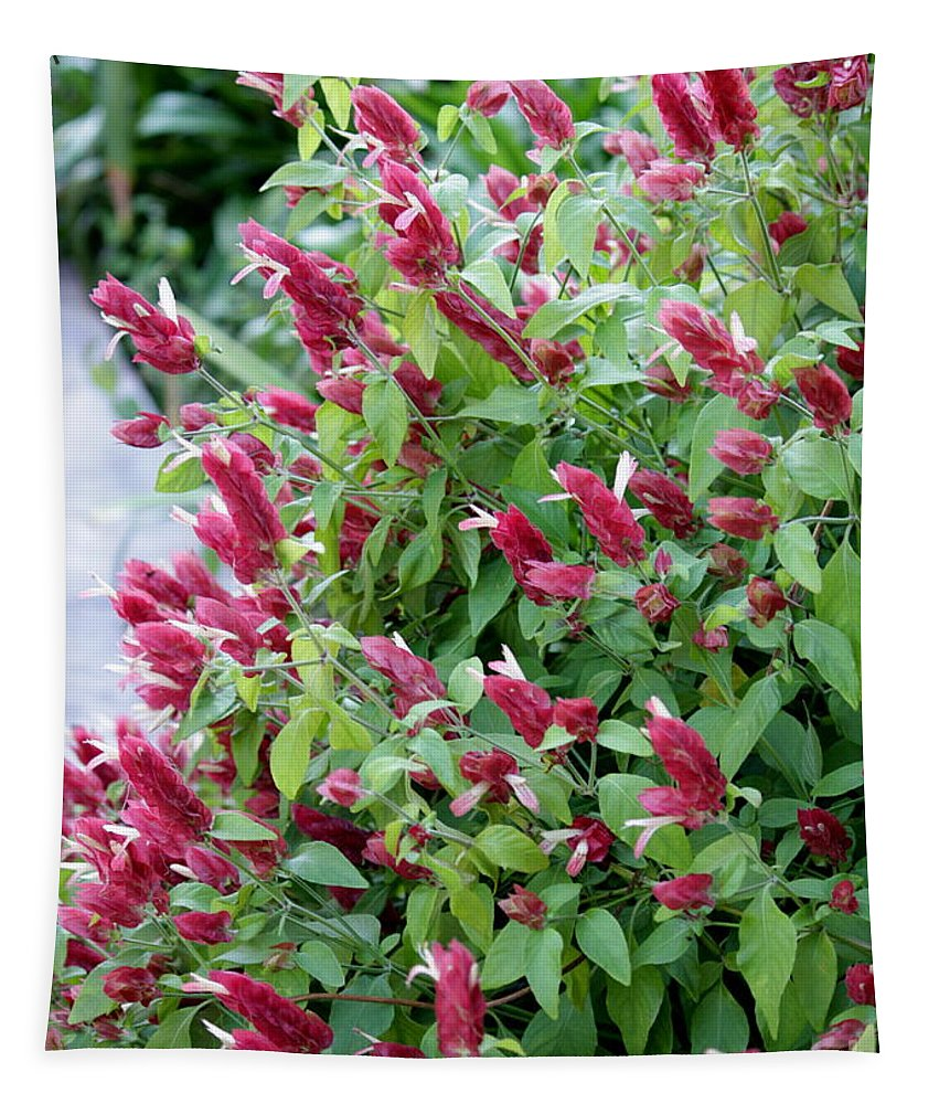 Pink Flowers Tapestry featuring the photograph Pink Shrimp Plant by Carol Groenen