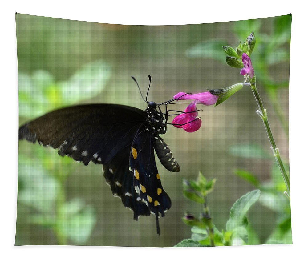Pipevine Swallowtail Butterfly. Swallowtail Butterfly Tapestry featuring the photograph Pipevine Swallowtail by Saija Lehtonen