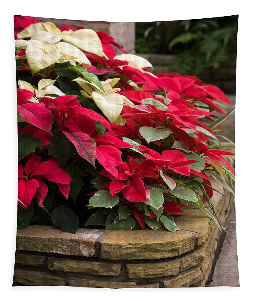 Poinsettia Tapestry featuring the photograph Poinsettia Garden by Dale Kincaid