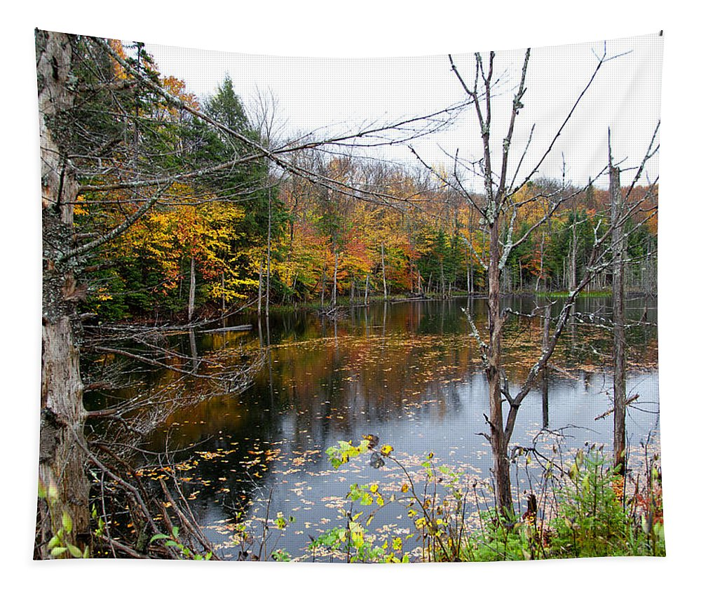 Adirondack's Tapestry featuring the photograph Pond On Limekiln Road by David Patterson