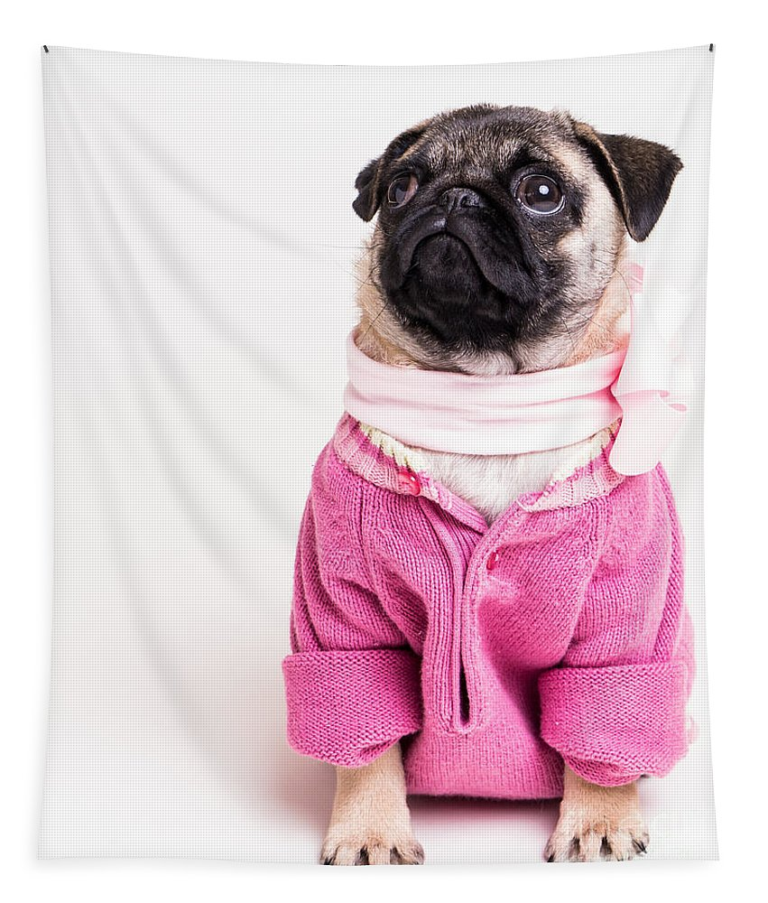 Pug Tapestry featuring the photograph Pretty In Pink by Edward Fielding