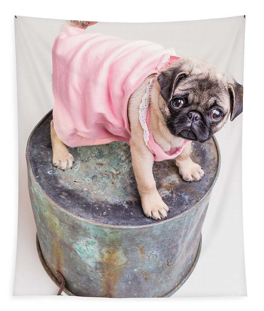 Pug Tapestry featuring the photograph Pug Puppy Pink Sun Dress by Edward Fielding