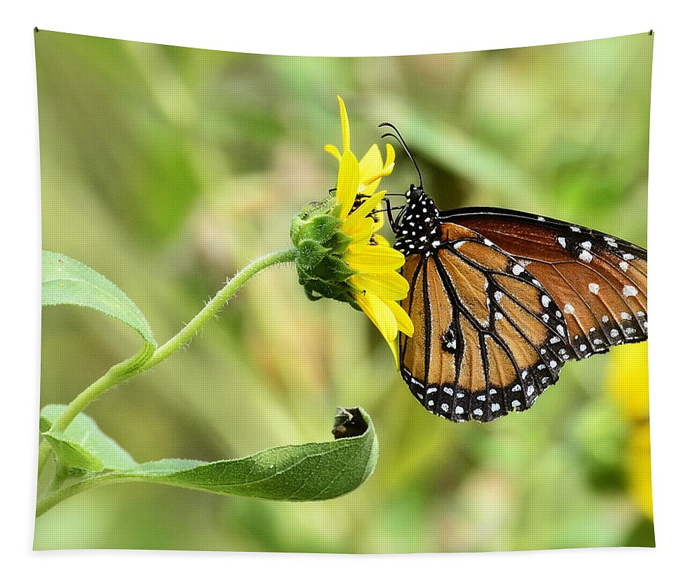 Queen Butterfly Tapestry featuring the photograph Queen For A Day by Saija Lehtonen
