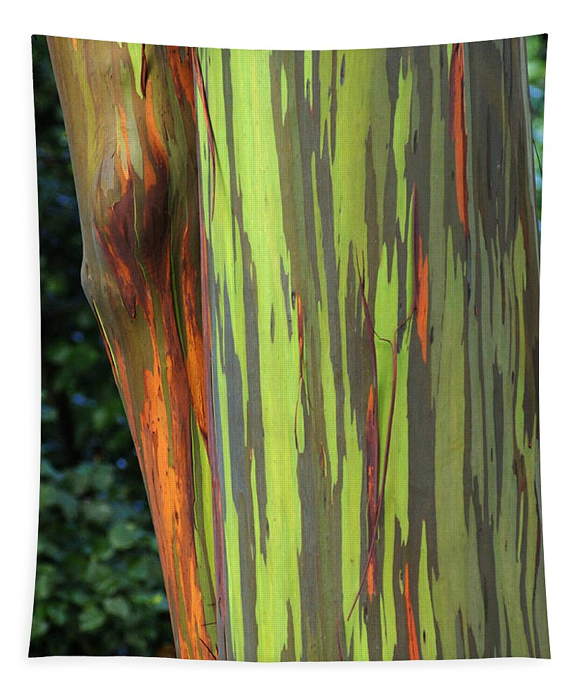 Rainbow Gums Tapestry featuring the photograph Rainbow Gum Tree Hawaii by Bob Christopher