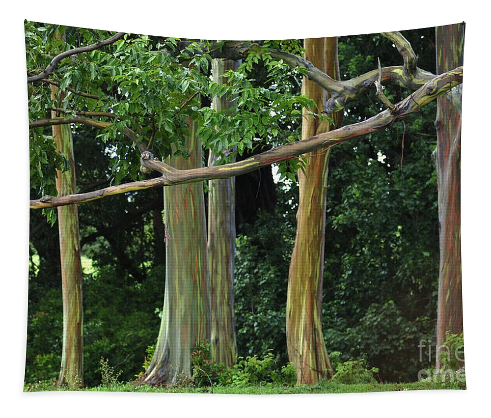 Rainbow Gums Tapestry featuring the photograph Rainbow Gum Trees by Bob Christopher
