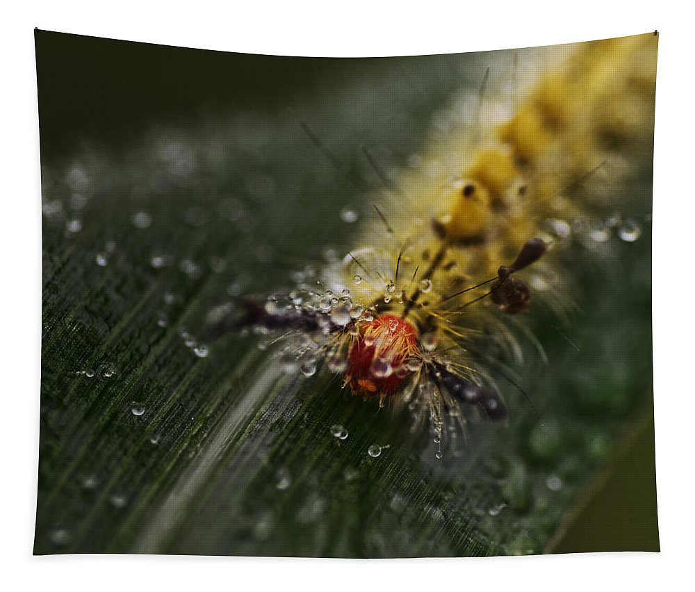 Caterpillar Tapestry featuring the photograph Raining On My Parade by Susan Capuano