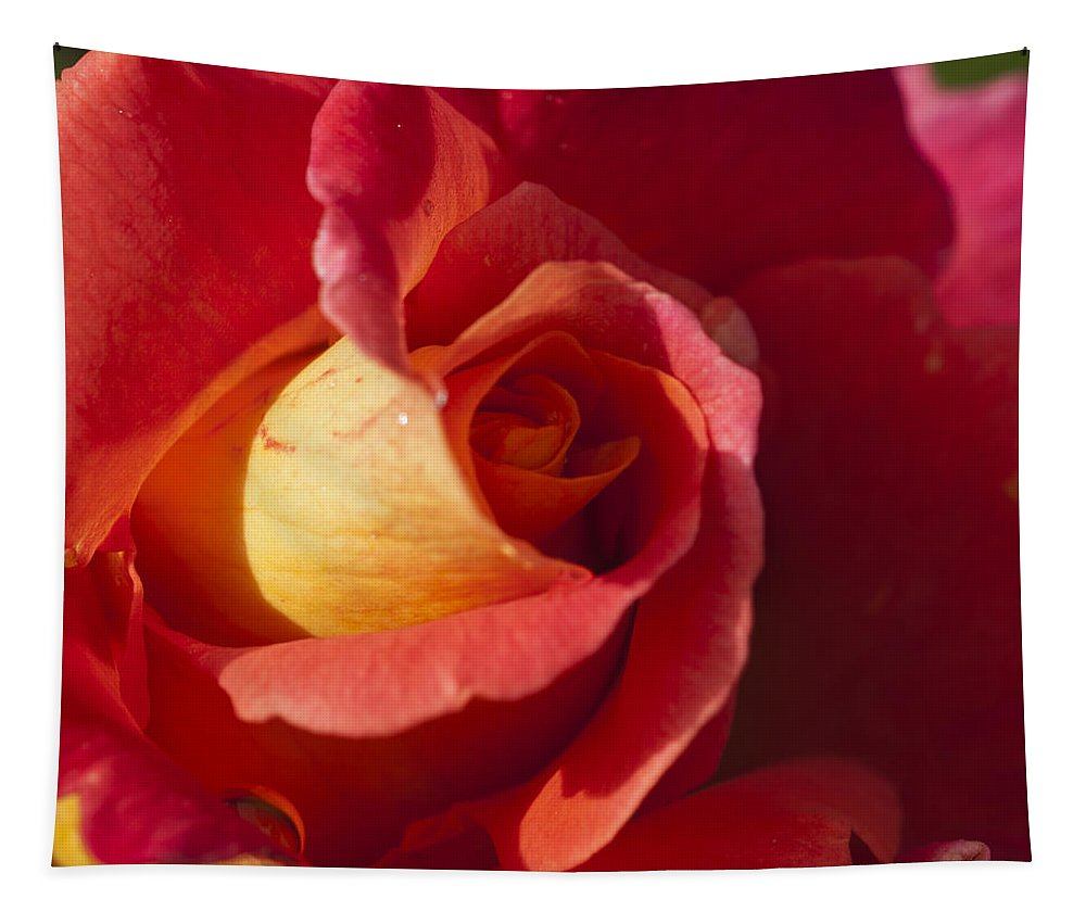 Red And Orange Rose Tapestry featuring the photograph Red And Orange by Steve Purnell
