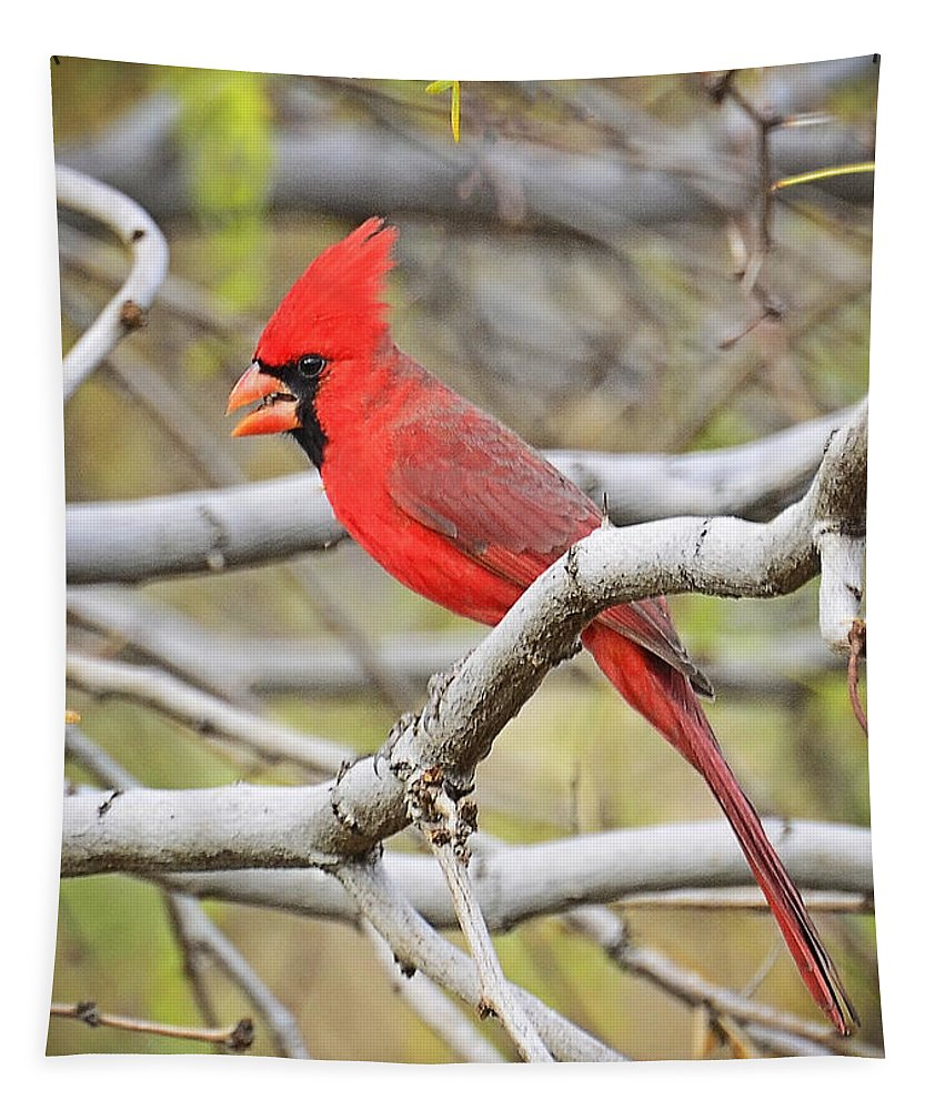 Red Cardinal Tapestry featuring the photograph Red Cardinal by Saija Lehtonen