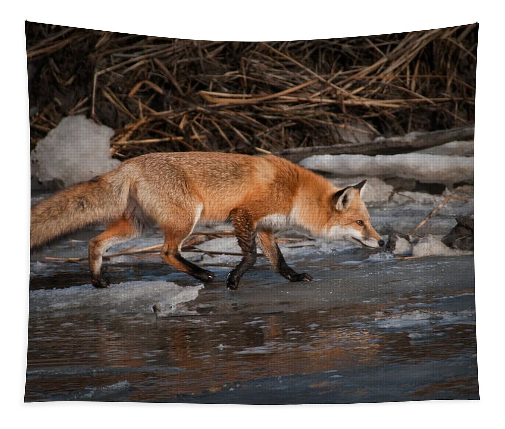 Animals Tapestry featuring the photograph Red Fox Crossing by Craig Leaper