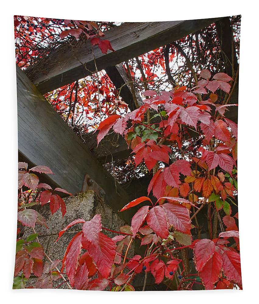 Arbor Tapestry featuring the photograph Red Grape Leaves And Beams by Mick Anderson