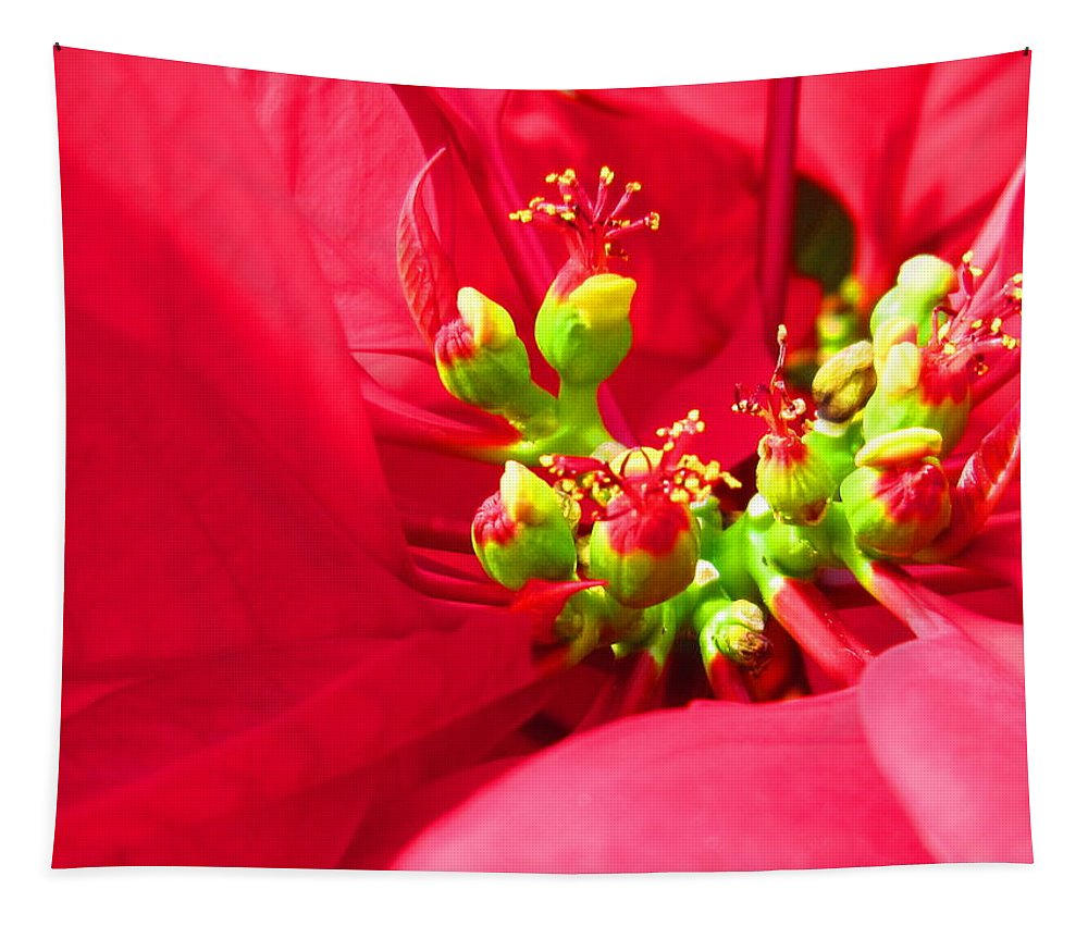 Close Tapestry featuring the photograph Red Poinsettia by Lisa Stanley