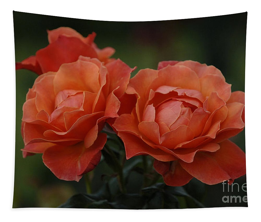 Red Roses Tapestry featuring the photograph Red Roses by Bob Christopher
