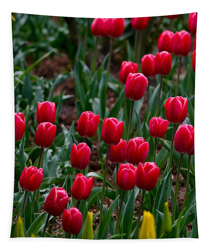 Red Tapestry featuring the photograph Red Tulips by Mitch Shindelbower