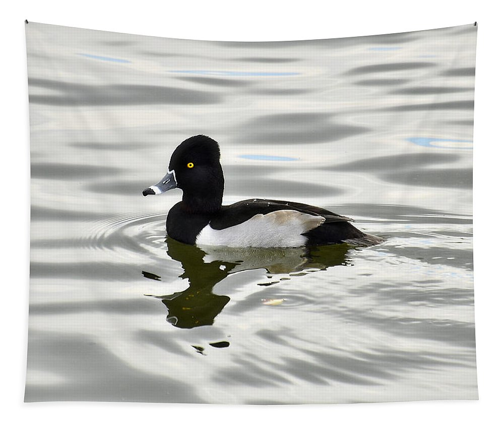 Ring Necked Duck Tapestry featuring the photograph Ring Necked Duck by Saija Lehtonen