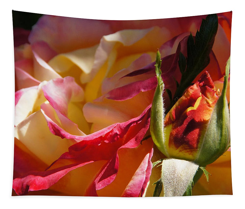 Rio Samba Tapestry featuring the photograph Rio Samba Rose And Bud by Mick Anderson