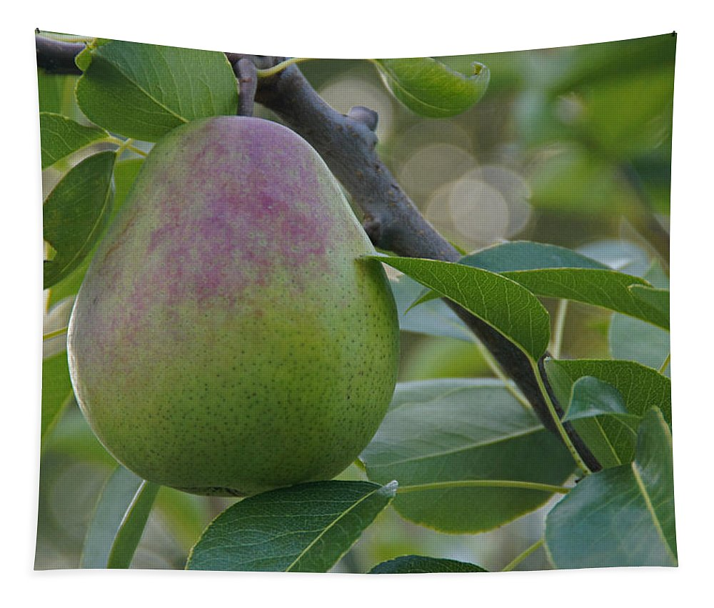 Pear Tapestry featuring the photograph Ripening Pear In Tree by Mick Anderson