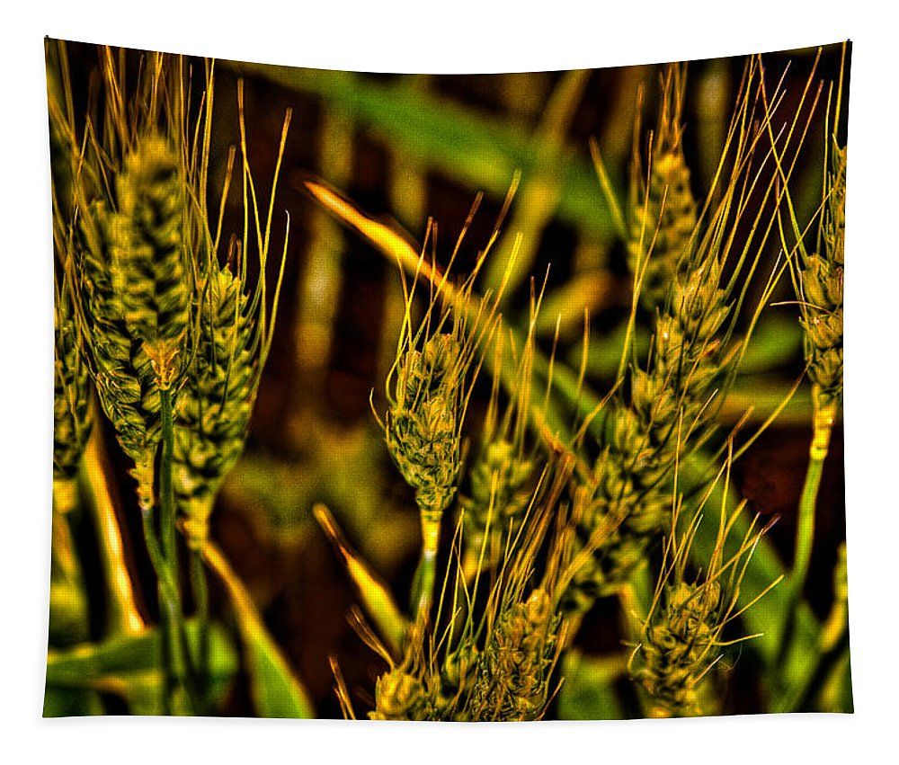 Bearded Wheat Tapestry featuring the photograph Ripening Wheat by David Patterson
