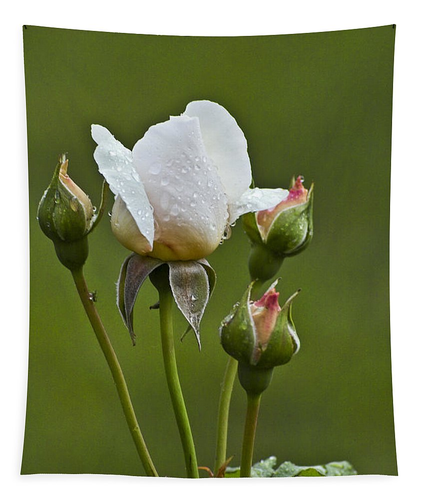 Rose Tapestry featuring the photograph Rose Flower Series 6 by Heiko Koehrer-Wagner
