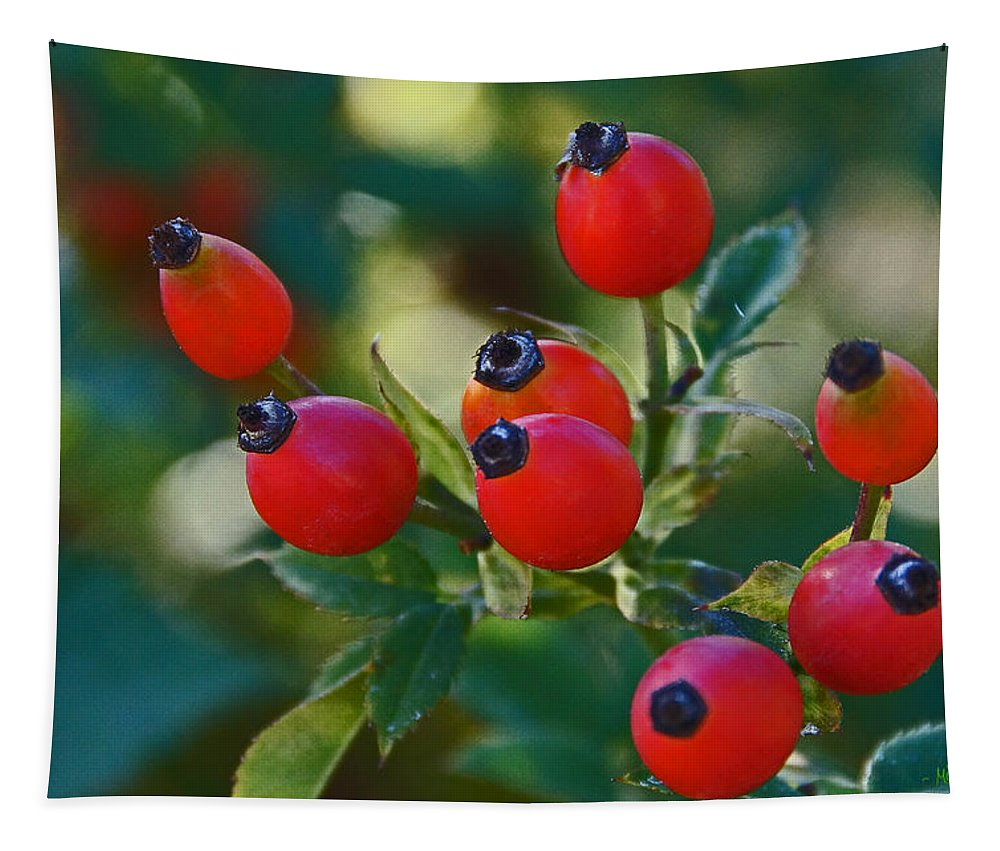 Rose Hips Tapestry featuring the photograph Rose Hips by Mick Anderson