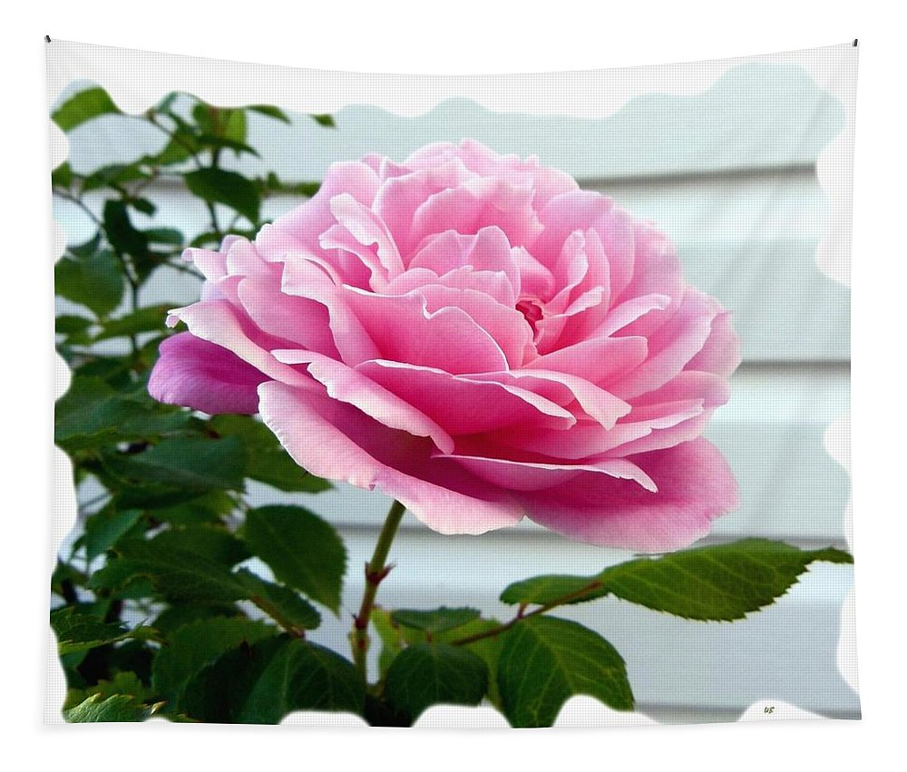 Royal Kate Rose Tapestry featuring the photograph Royal Kate Rose by Will Borden