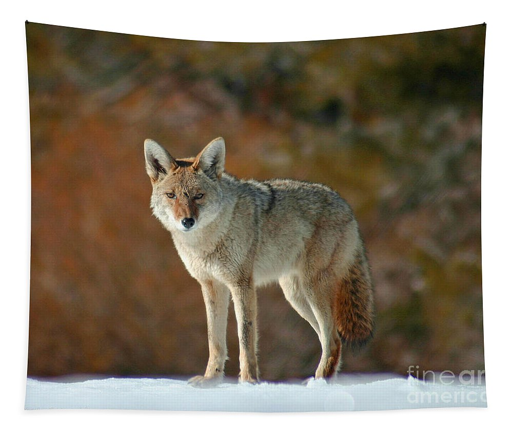 Coyote Tapestry featuring the photograph Scarface. by Mitch Shindelbower