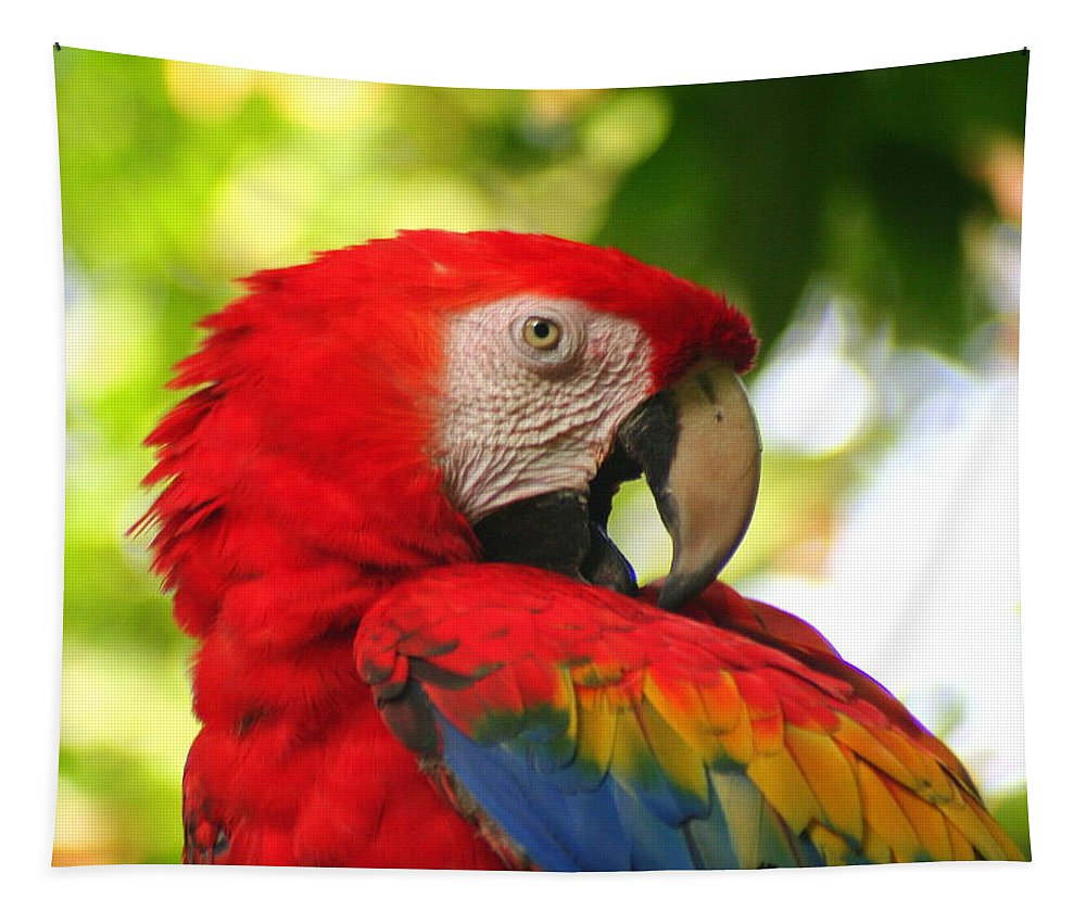 Scarlet Macaw Tapestry featuring the photograph Scarlet Macaw by Laurel Talabere