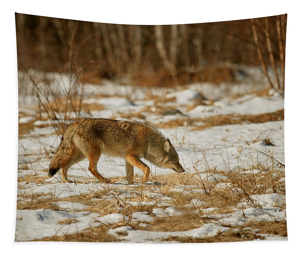 Wolf Tapestry featuring the photograph Scent Of A Doe by Susan Capuano