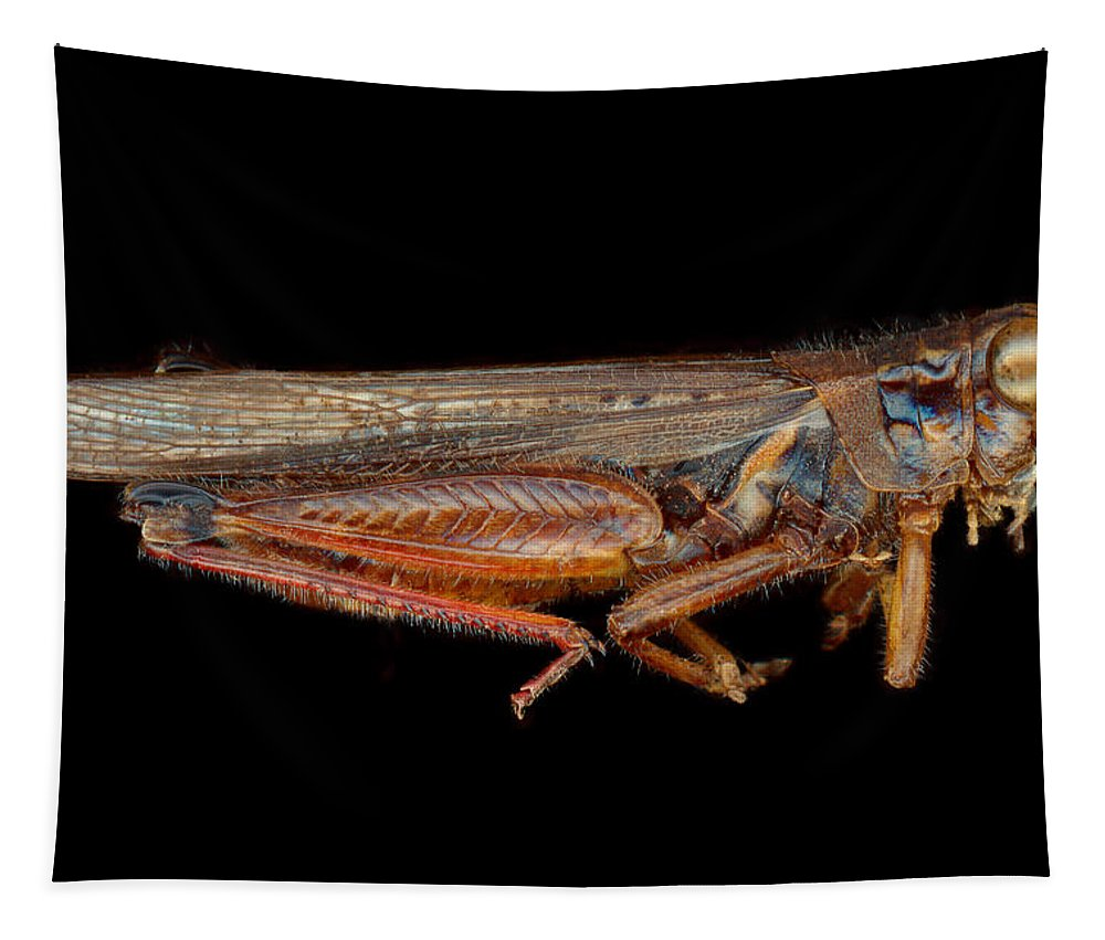 Insect Tapestry featuring the photograph Science - Entomology - The Specimin by Mike Savad