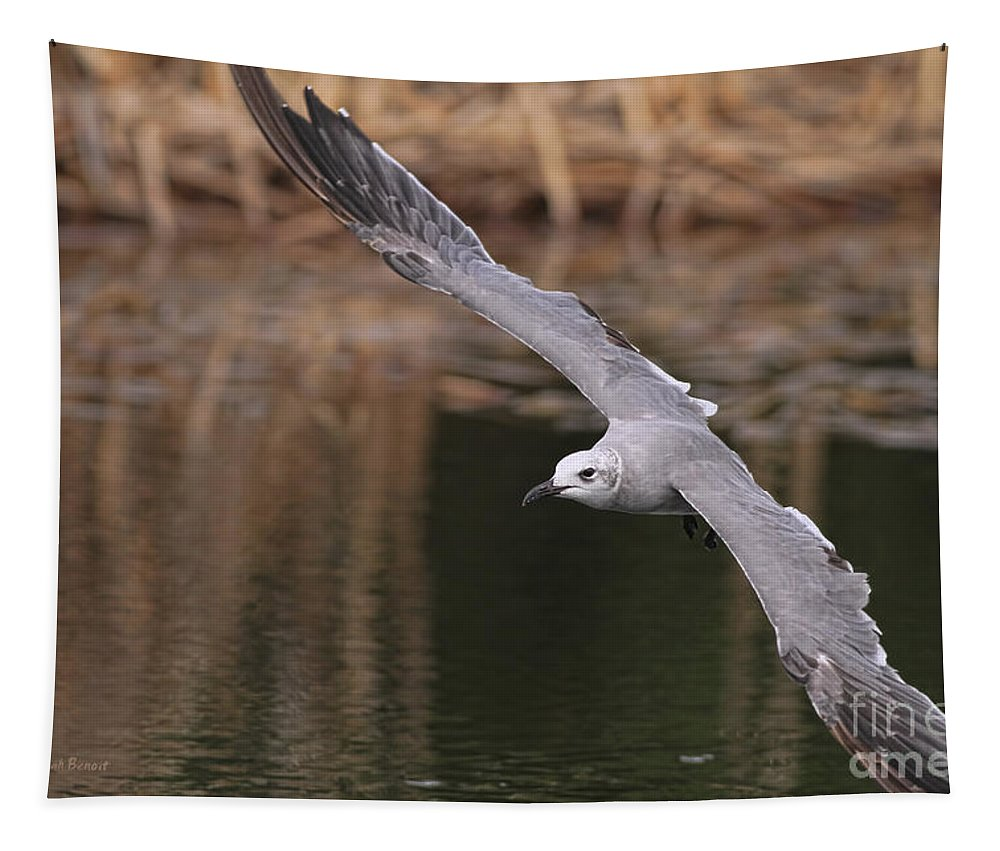 Seagull Tapestry featuring the photograph Seagull Seagull On The Move by Deborah Benoit