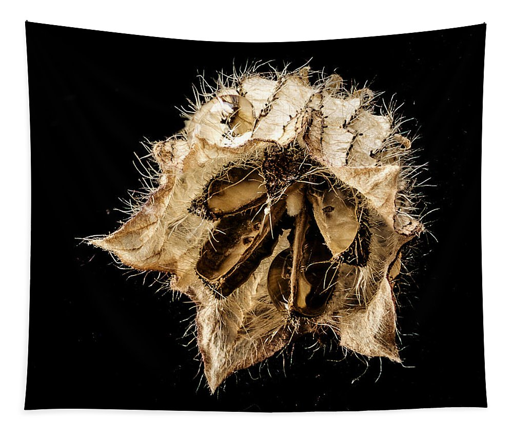Seed Pod Tapestry featuring the photograph Seed Pod by Jean Noren