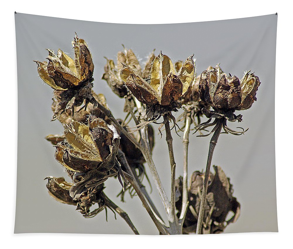 2d Tapestry featuring the photograph Seed Pods by Brian Wallace