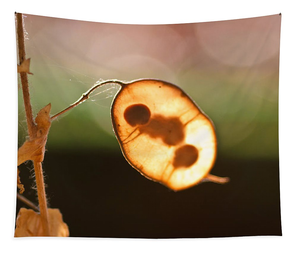 Seeds And Stems Tapestry featuring the photograph Seeds And Stems by Mitch Shindelbower