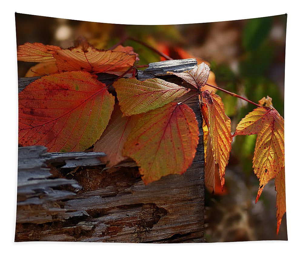 Nature Tapestry featuring the photograph Shade In Fall by Susan Capuano