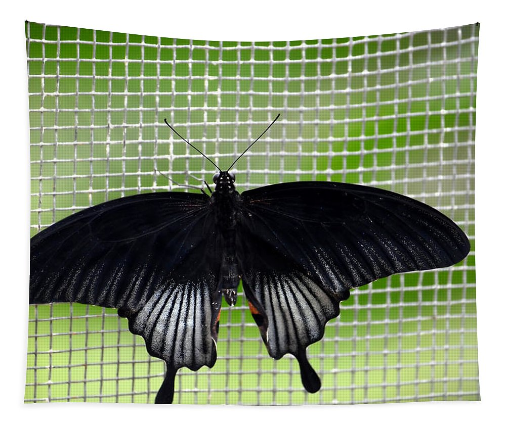 Butterfly Tapestry featuring the photograph Shades Of Black by Richard Ortolano
