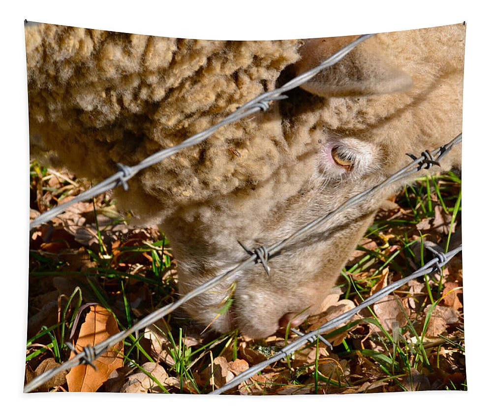 Sheep Tapestry featuring the photograph Sheep 1 by Bill Owen
