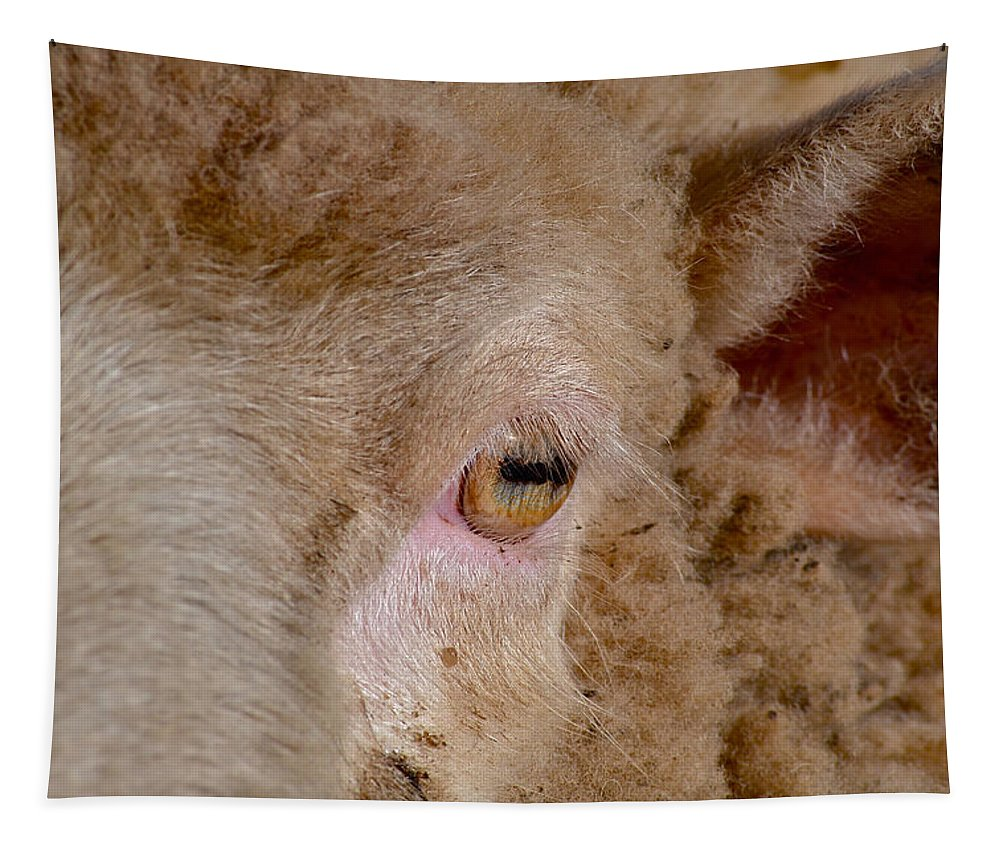 Sheep Tapestry featuring the photograph Sheep Close Up by Bill Owen