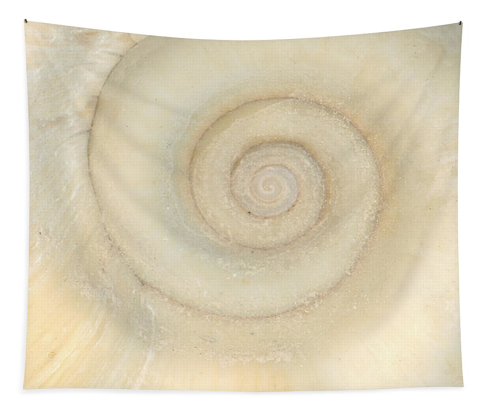 Spiral Tapestry featuring the photograph Shell - Conchology - White Spiral by Mike Savad