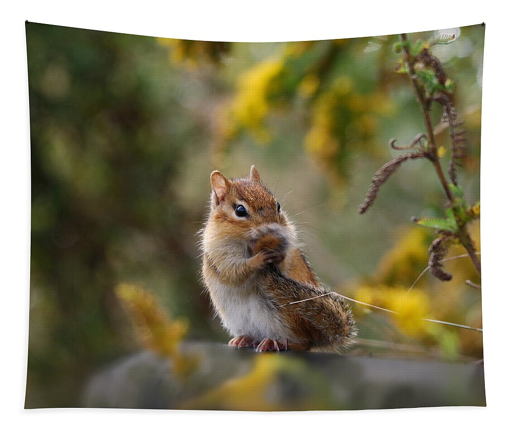 Chipmunk Tapestry featuring the photograph Shy Little Chipmunk by Susan Capuano