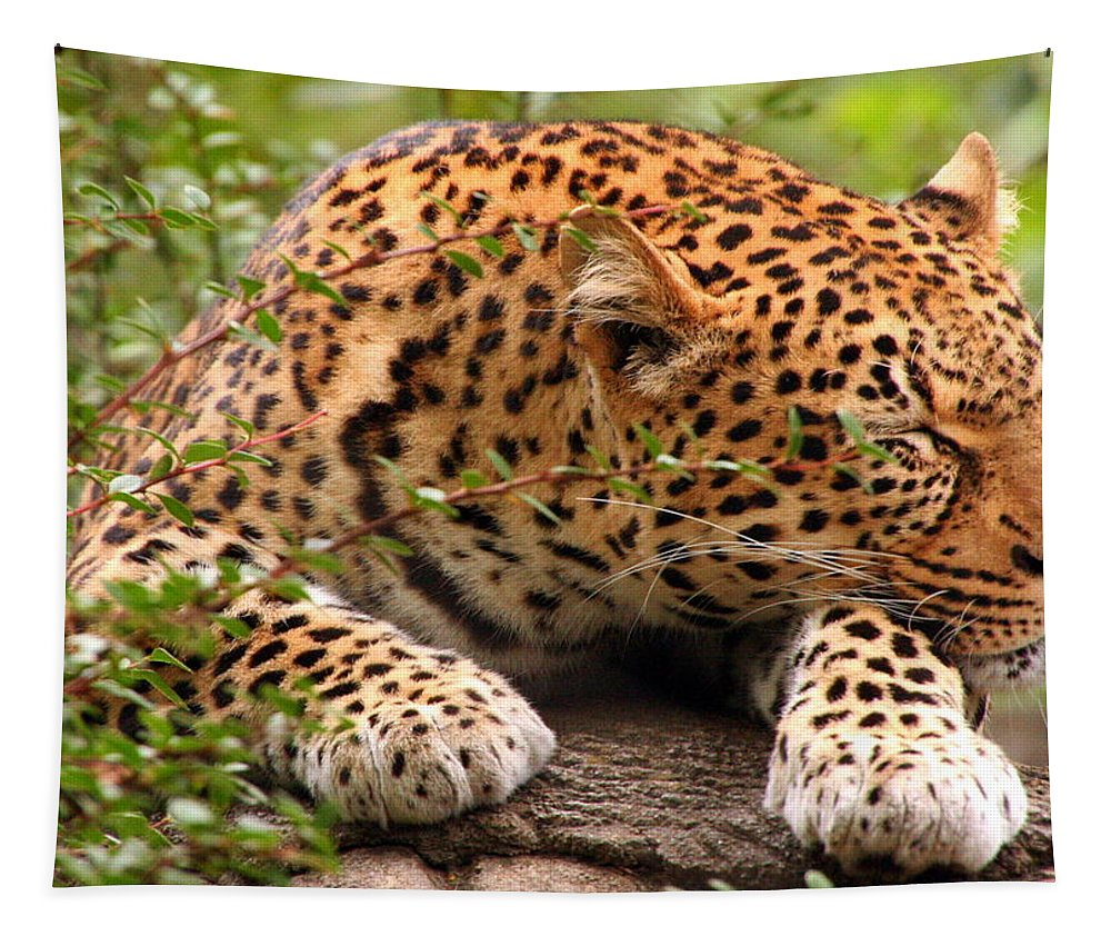 Leopard Tapestry featuring the photograph Sleeping Leopard by Laurel Talabere