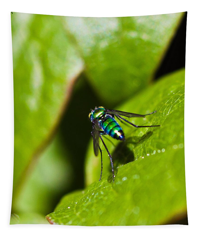 Small Green Fly Tapestry featuring the photograph Small Green Fly by Mitch Shindelbower