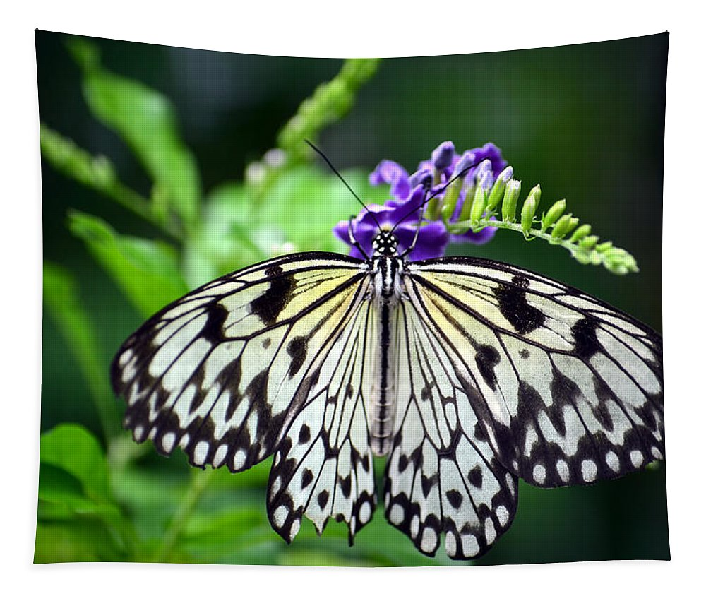 Butterfly Tapestry featuring the photograph Snack Time by Richard Ortolano