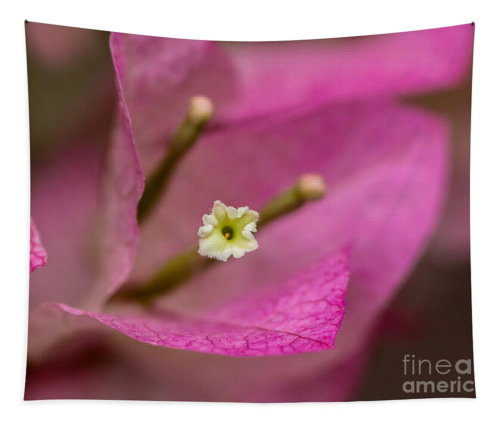 Soft Touch Tapestry featuring the photograph Soft Touch by Mitch Shindelbower