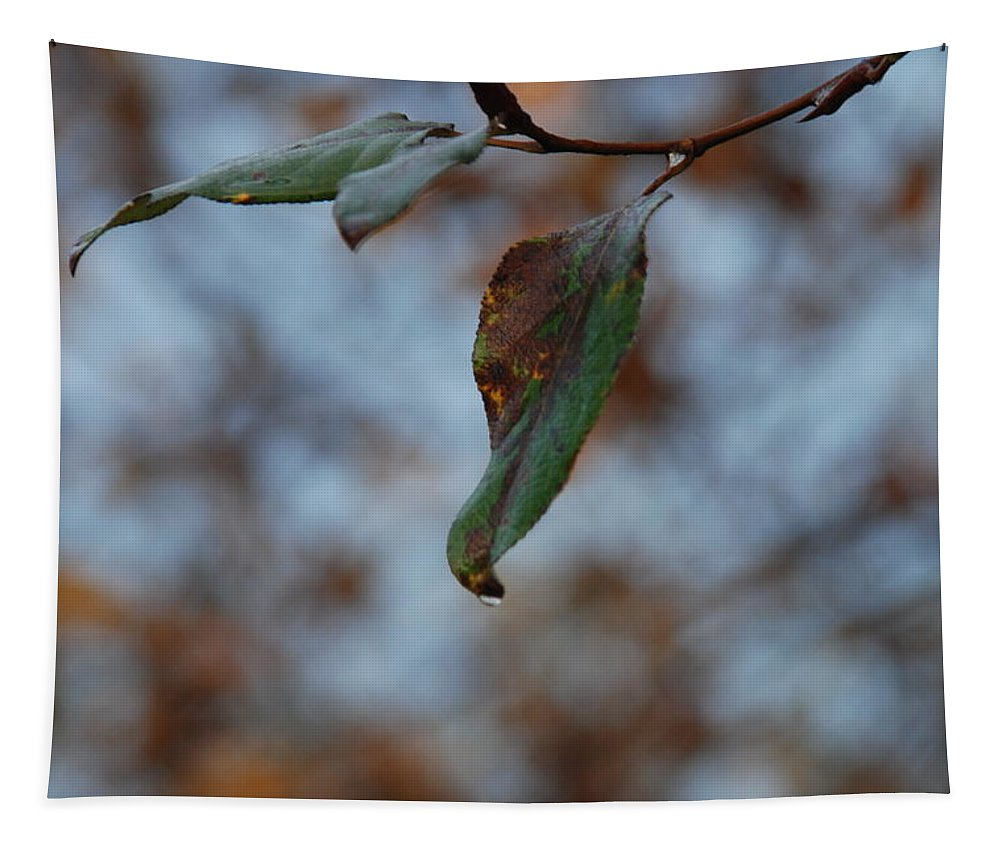 Leaf Tapestry featuring the photograph Solitary by Michael Merry